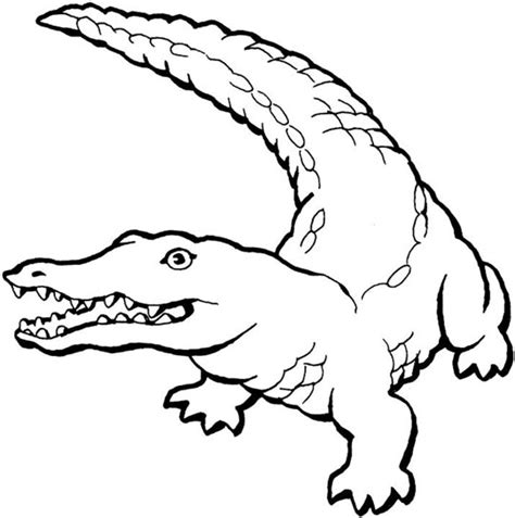 Free Coloring Pages Crocodiles Alligator Coloring Pages