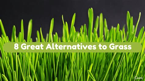 backyard grass alternatives 8 great lawn alternatives to grass holy kaw