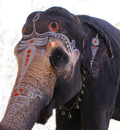 Decorated Elephants by 44 Best Images About Decorated Elephants On