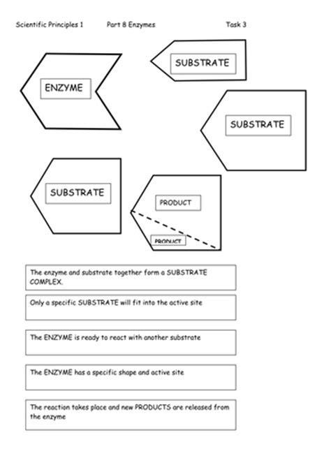 Enzyme Worksheet by Enzyme Activity Worksheet Worksheets Releaseboard Free