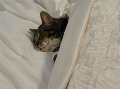 Cat Macaron Bed by Daily Writer S Fix December 10 14 Nooks Cranberries