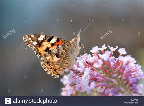 Drohne Fliegen Englischer Garten München by Pollinators Stockfotos Pollinators Bilder Alamy