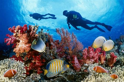 best place to scuba dive the best places around the world to scuba dive amazing