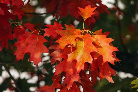 why leaves turn color in the fall growth in gardening why leaves change color in the fall