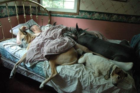 why does my dog sleep under the bed sleeping dogs photo contest winners fidose of reality