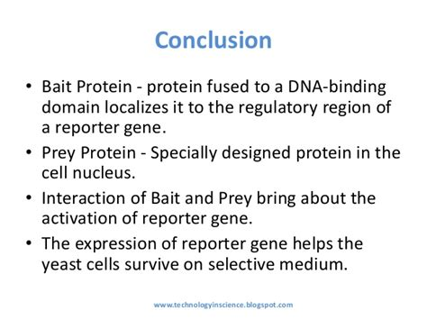 protein yeast yeast two hybrid system for protein protein interaction