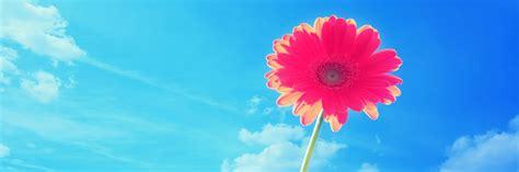imagenes bonitas de paisajes para portada extraordinarias imagenes de flores para portada