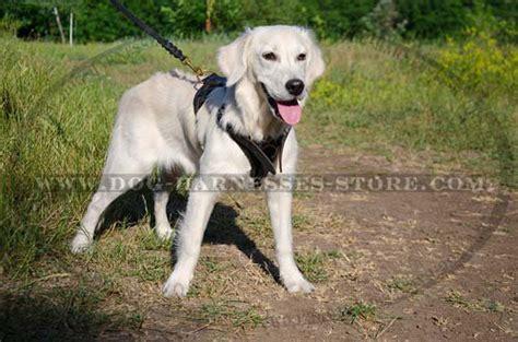 golden retriever harness soft harness for golden retriever 163 48 90