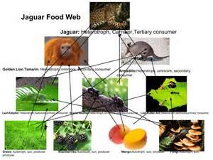 Jaguar Food Chain Jaguar Food Web Thinglink