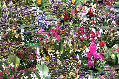 catalogo fiori da giardino andrea mastrovito enciclopedia dei fiori da giardino