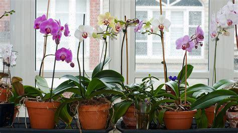 Wie Pflegt Orchideen Richtig 4793 by Orchideen Pflegen Ratgeber Egarden