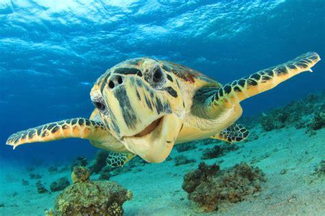 Types Of Aquarium by National Aquarium Happy World Turtle Day