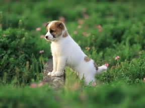 Cute Dog Wallpapers by Cute Puppy Pictures Wallpapers Wallpaper Cave