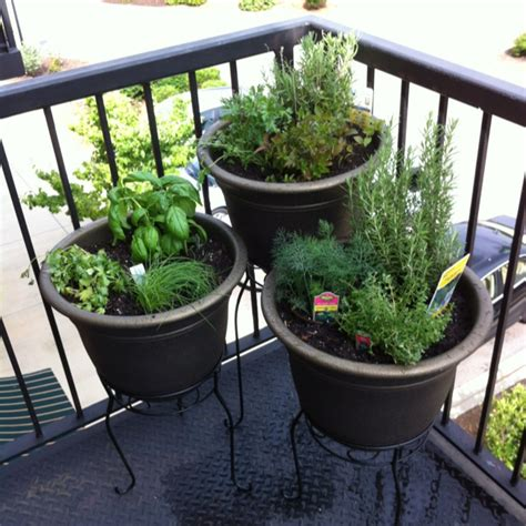 Balcony Herb Planter by Balcony Herb Garden Home