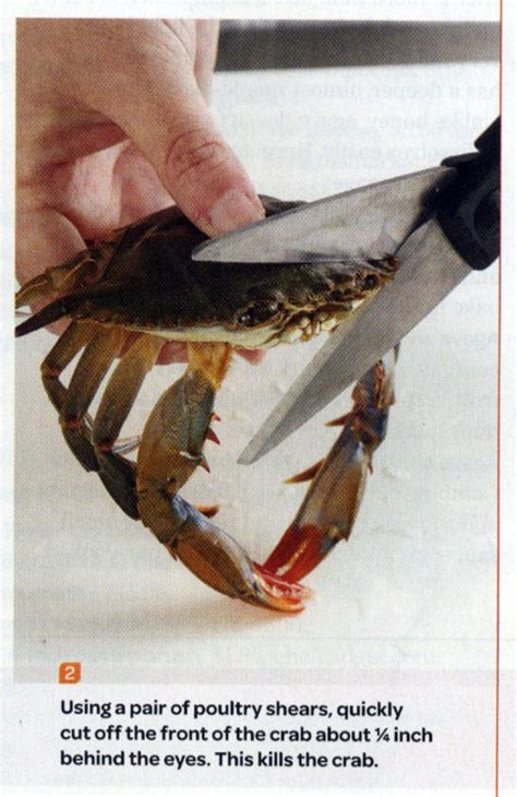 Crab Scissors Meme - image 112843 this kills the crab know your meme