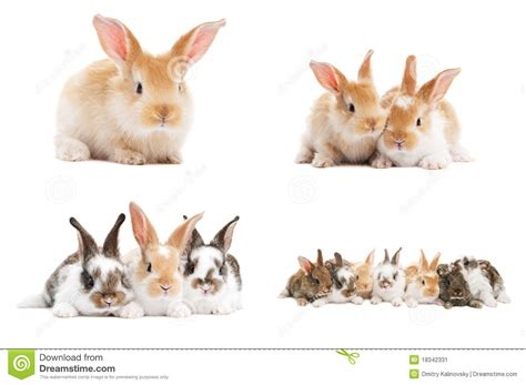 Set Rabbit by Set Of Baby Bunny Rabbits Stock Image Image 18342331