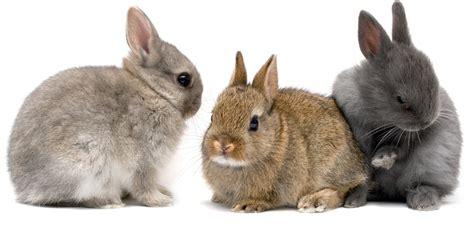 como se aparean los animales con humanos conejos mi veterinaria