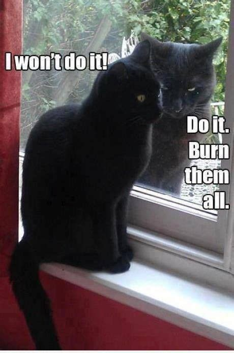 Black Cat Memes - do it meme slapcaption com black cat memes