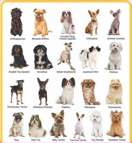 all small breeds a list small breeds simple image gallery
