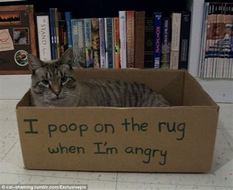 cat poops on rug i on the rug when i m angry badly behaved cats named and shamed daily mail