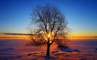 Winter sun Wallpaper #8671