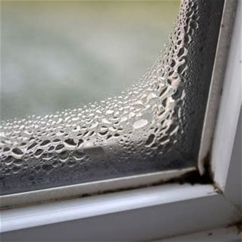 signs of mold in house signs of mold what to look for when buying a house allergies asthma mcs multiple chemical