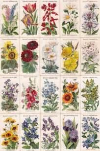 List Of Garden Flowers With Pictures Garden Flowers Gardening Secret Gardens