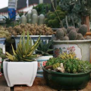 Jurus Sukses Bisnis Tanaman Hias bisnis kaktus adalah bisnis masa depan rmolbengkulu