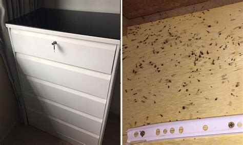 Roaches In Kitchen Cabinets 430 Drawer Cabinet Filled With Roaches But Of Shop Says It S Not Problem
