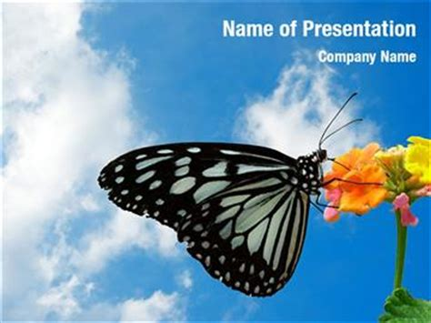 Beautiful Butterfly Powerpoint Templates Beautiful Butterfly Ppt Template Free
