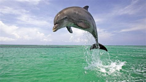 high images dolphin awesome hd pictures images backgrounds high