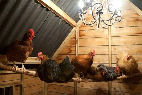 how chicken tractors can increase egg production and get 3 illuminate the inside 10 ways to build a better