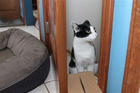 cat poops on bed jeffrey welch s blog how i stopped my dogs from eating