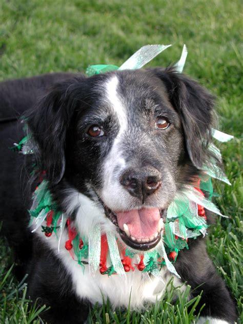 nasal tumors in dogs related keywords suggestions for nasal tumors in dogs