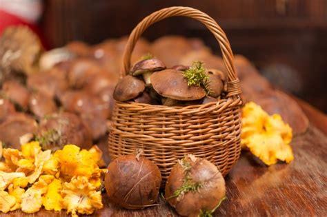 funghi pioppini come cucinarli come cucinare i funghi con salvatore tassa agrodolce