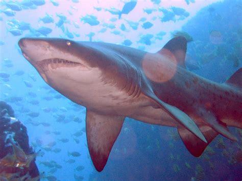 film barat ikan hiu selamat datang di blog teratai cinta ikan hiu