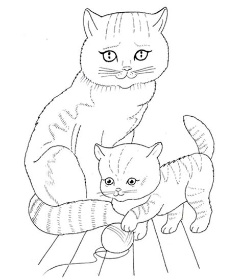 baby cat boy face printable new girl sketch coloring page