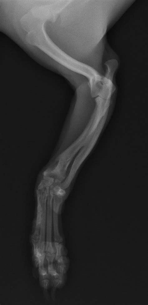4 scientific articles every vet needs to read - Veterinary