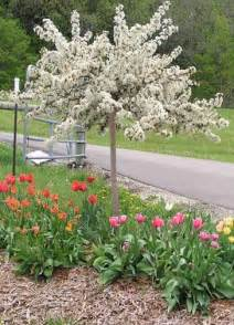 dwarf ornamental trees for zone 6 myideasbedroom com