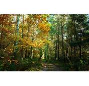 Wallpaper Autumn Forest Trees Trail Nature