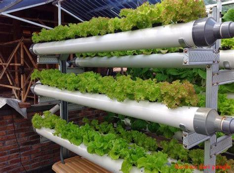 cara membuat nutrisi hidroponik pdf cara menanam tanaman selada hidroponik sistemhidroponik