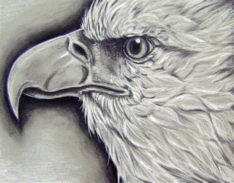 Drawings Of Animals by Animal Charcoal Drawings Ms Turnbull S Student Gallery