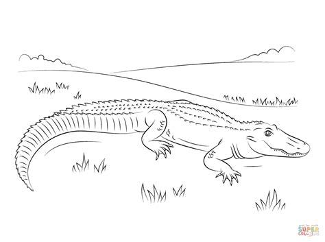 cute american alligator coloring page free printable