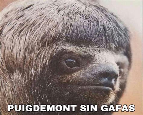 puigdemont memes demigrante memes de puigdemont y su no dui