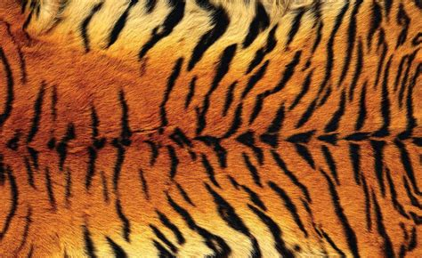 tiger pattern hd tiger skin wall paper mural buy at europosters