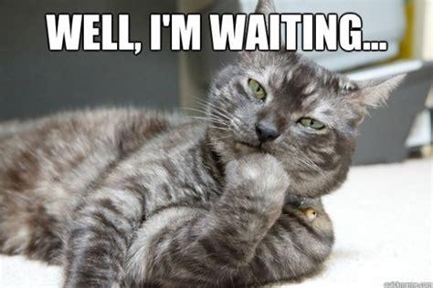 Unamused Meme - unamused cat meme guy