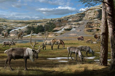 ancient arctic mystery solved    woolly rhino