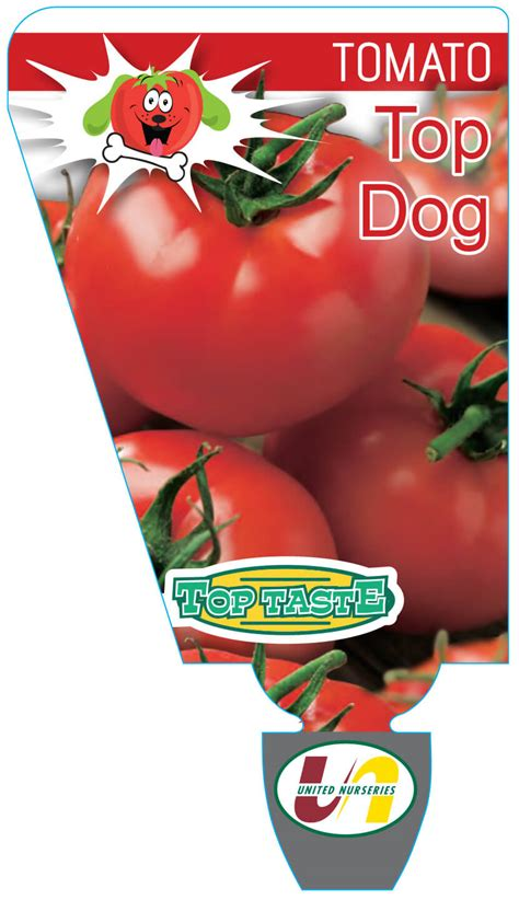 tomatoes for dogs tomato top 100mm united nurseries pty ltd