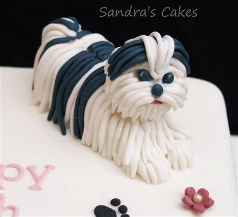 shih tzu cake 1000 images about a spoiled rotten shih tzu lives here on for dogs pets
