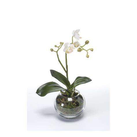 Délicieux Orchidee Artificielle En Pot #1: phalaenopsis-orchidee-artificielle-en-pot-verre-29-cm.jpg